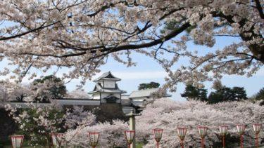 兼六園の桜は海外からの観光客にも大人気